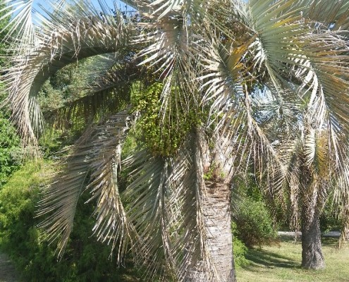 Коллекция пальм