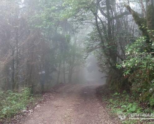 Старая Воронцовская дорога