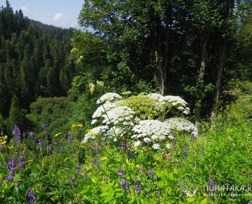 Природа Архыза