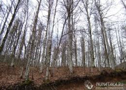 Лес в декабре