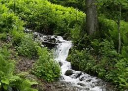 Безымянный ручей