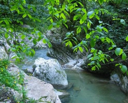 Зеленые ветви деревьев обрамляют каньон Кудепсты