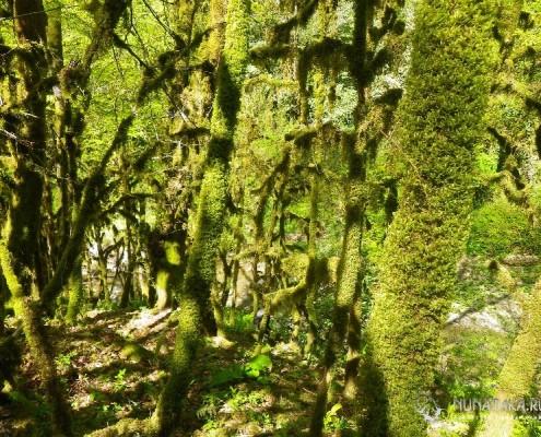 Колхидский лес