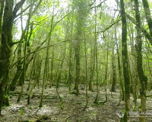 Голый самшитовый лес
