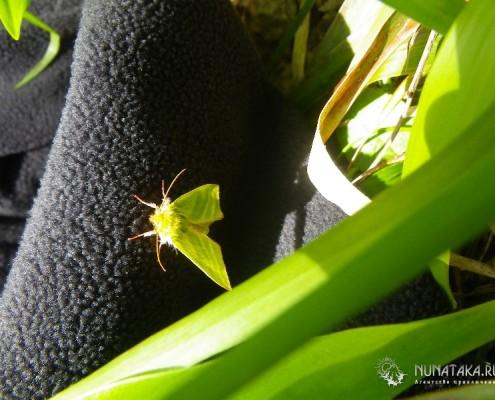 Зеленая бабочка