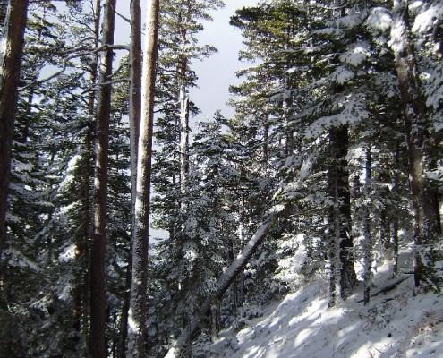 Дорога в снегу