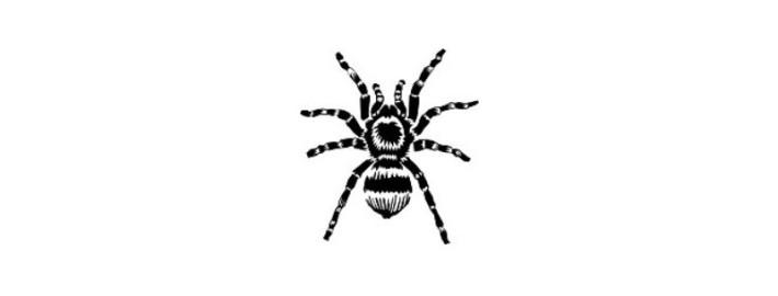 Почему люди боятся пауков?