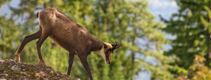 Флора и фауна Тебердинского заповедника