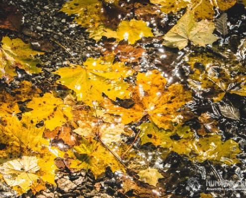 Листья на тропе. Осень