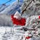 Куда поехать в России на Новогодние праздники
