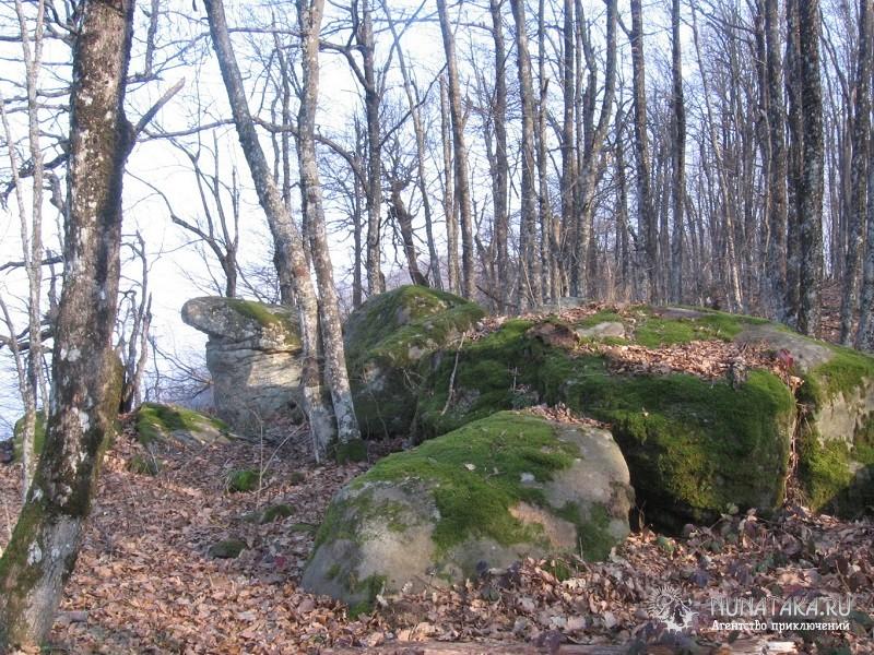 Лес в окрестностях Красных скал