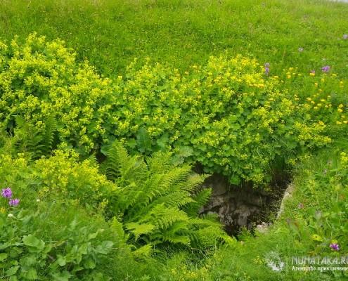 Пышная растительность плато