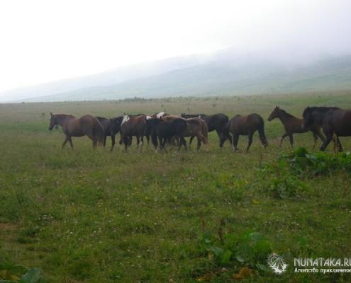 Полудикие лошади гуляют по просторам Лаго-Наки