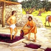 История виноделия Древней Греции